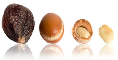 argan fruit and kernel